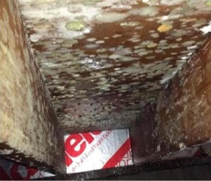 Mold Remediation SERVPRO of Bennington & Rutland Counties Offers FREE Mold Inspections